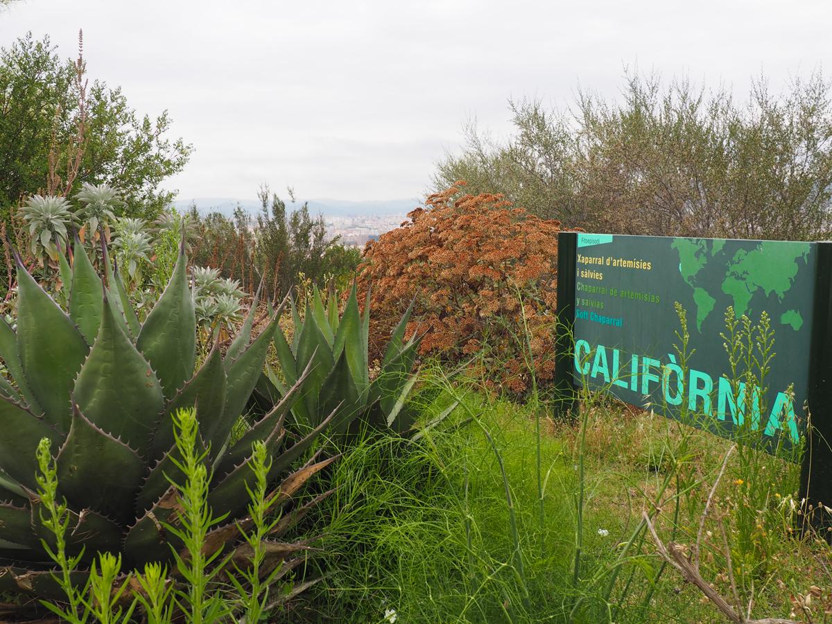 Espacio de California en el Jardín Botánico de Barcelona