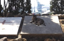 Cementerio de Montjuïc - Gato sobre tumba