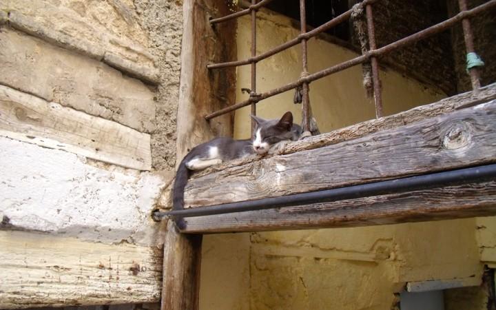Uno de los muchos gatos de Fez
