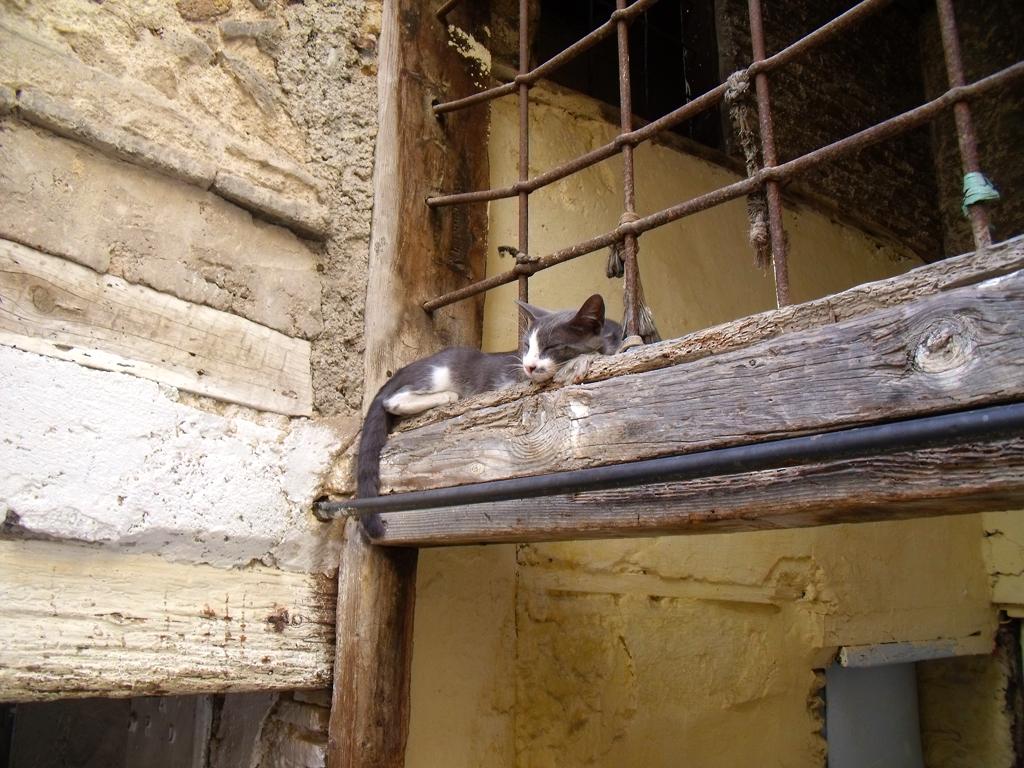 Gato en Fez
