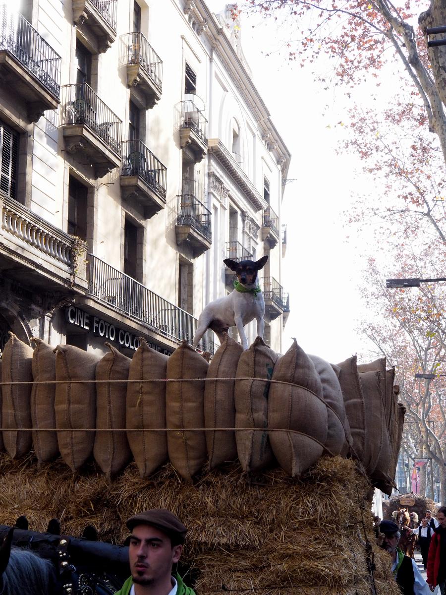 Perro sobre carruaje - Els Tres Tombs de Sant Antoni